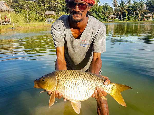 Common Carp at Chalong Fishing Park