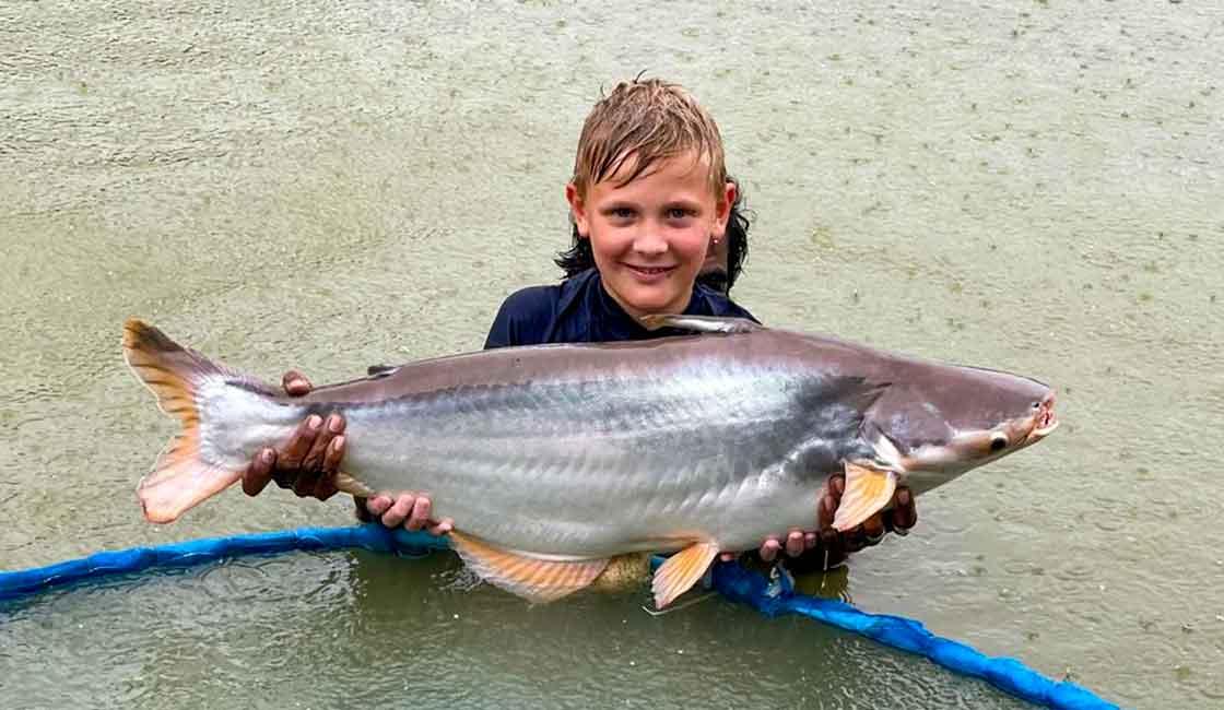 Arapaima on the Fly-Catfish
